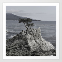 Lone Cypress in Black and White Art Print by Liveart4evr