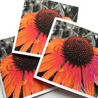 Painted Coneflower - Set of Three Square Art Greeting Cards by OneDayOneImage Fine Art Cards