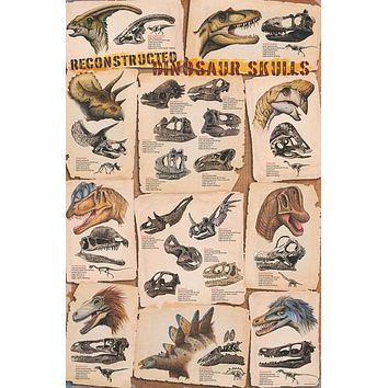 Dinosaur Skulls Reconstructed Education Poster 24x36