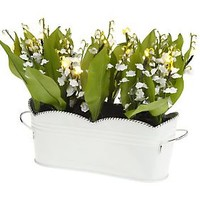 Bethlehem Lights Potted Lily of the Valley with Timer — QVC.com