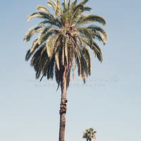 Palm tree print, California Photography, Los Angeles Photograph, Hollywood, Bohemian Wall Art, California Decor, Vintage print, Poster Size,