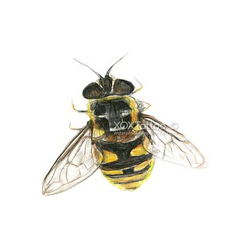 Bumble Bee Waterproof Temporary Tattoos Lasts 3 to 4 days Choose Small, Medium or Large Sizes