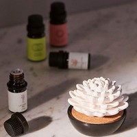Succulent Essential Oil Diffuser | Urban Outfitters