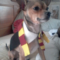 harry potter small dog costume