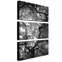 Trademark Global Trademark Global Speaking by Cat Eyes 3 Piece Photographic Print on Canvas Set