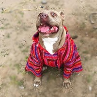 Preorder - Baja Hoodie Poncho for Dogs Size Large