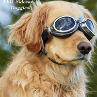 Doggles Sidecar Dog Goggles Sunglasses - Closeout, Price reduced!