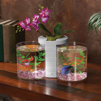 Elive Betta Cylinder & Planter - White