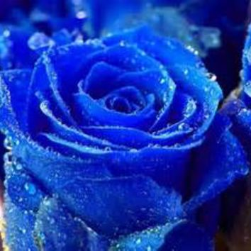 blue flowers - Bing Images