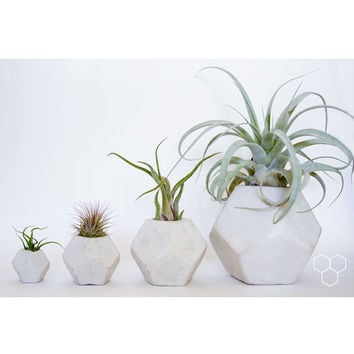 Dodecahedron Geometric Concrete Planter - Plants not included