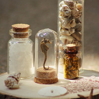 Small Corked Glass Bottles Arrangement Filled with Natural Elements. Taxidermy Seahorse Display. Ocean Theme on Wood Slab.