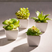 Potted Faux Aloe Succulent Plant | Urban Outfitters