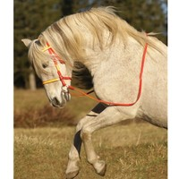Two Horse Tack