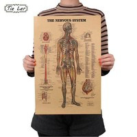The Nervous System Vintage Retro Paper Poster Anatomy Body Structure Wall Decor
