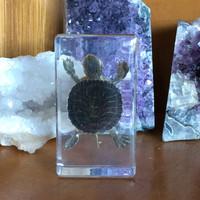 Tiny Turtle Paperweight