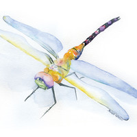 Dragonfly Watercolor