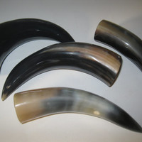 4 Cow horns...E4A... Natural colored, polished cow horns...buffalo horn....bull....steer....goat ...sheep...ram..ox
