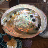 Giant Abalone Shell