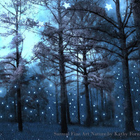 "Nature Photography, Haunting Blue Woodlands, Sparkle Shimmer Twinkling Lights, Dreamy Fine Art Fantasy Photograph 9"" x 12"""