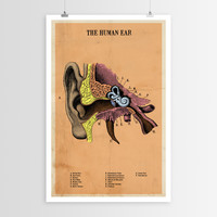 The Human Ear POSTER