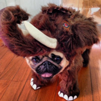 Animal Planet Wooly Mammoth Dog Costume (50% OFF)