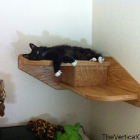 Corner Cat Stair from The Vertical Cat