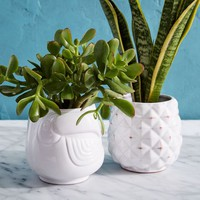 Ceramic Tropical Planters