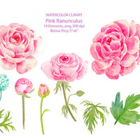 Wedding Clipart - Watercolor pink ranunculus printable instant download