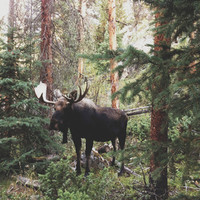 The Modest Moose Art Print by Kevin Russ