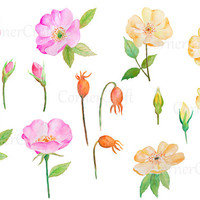 hand painted watercolour pink roses yellow roses buds seed pods digital clipart instant download scrapbook wedding cards greeting cards