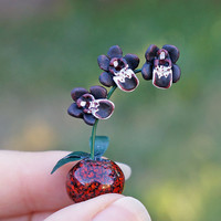 Miniature Black Orchids - Spooky Dollhouse Flowers in Red Vase