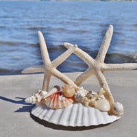 Multi-Use Cake Topper White Knobby Real Starfish on a Giant Real Scallop