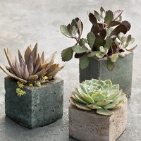 For the Home / Milk-Carton Pots - Decorative Flowerpots and Planters - Outdoor Living - Martha