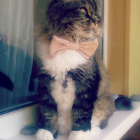 Knitted Bow / Bow Tie Pet Collar Ready to Ship custom colors & sizes available