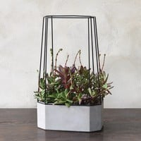 Indio Planter - Wide