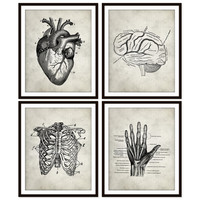 Vintage Heart Anatomy Art Print, Rib Cage, Brain, Hand Skeletal,Human Anatomy Set of Four 5x7, 8X10, 11x14 Medical Science Doctor Wall Decor