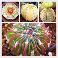 Sale 200 Rare African Mixed Seeds Cactus Succulent Plant Tree Purify Air Bonsai In The Heat Resistant Easy Care Creative Semente