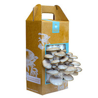 MUSHROOM KIT | Grow edible mushrooms in an instant with this indoor DIY kit. | UncommonGoods