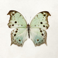 Color Me Butterfly - Nature Photography, Pastel Mint Green, Spring, Mother's Day, Garden, Nursery Wall Art, Minimal Home Decor