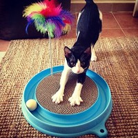 CAT'S MEOW - Cat Toy As Seen on TV - Undercover Mouse Exercise Toy