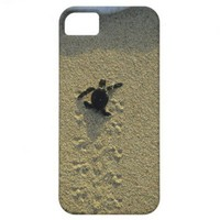 Green Turtle, (Chelonia mydas), hatchling iPhone 5 Covers from Zazzle.com