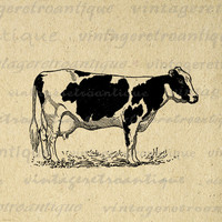 Printable Holstein Cow Digital Image Farm Animal Download Illustration Graphic Antique Clip Art for Transfers HQ 300dpi No.3104