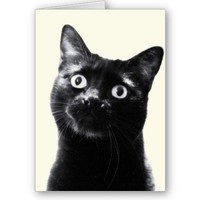 hello! greeting cards from Zazzle.com