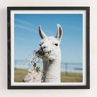 Ollie Alexander Baby Llama Drama Art Print | Urban Outfitters