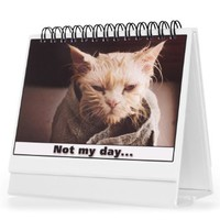 Cat Gifts For Cat Lovers - Moodycards! Make Everyone Laugh with These Adorable and Hilarious Cats - Let The Kittys Tell Everyone How You Feel! A Terrific Office Gift! 25 Different Moods