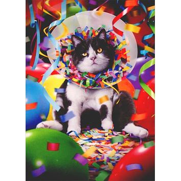 Birthday Greeting Card  - Cat in Party Cone