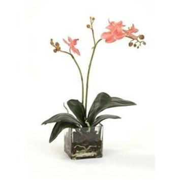 Rose-Pink Phalaenopsis Orchid Plant in a Square Glass Vase