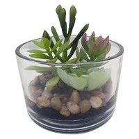 """Succulent in Small Clear Glass (4.25"""") - Threshold™ : Target"""