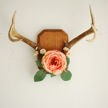 Deer Antlers on Wood Mount with Cabbage Rose Flowers and Leaves - Peach Pink Green Wall Hanging Taxidermy 8 Point Boho Home Decor Decoration