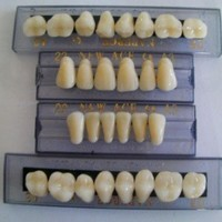 Halloween Horror Prop - Dental Quality Resin Teeth for Prop Building!